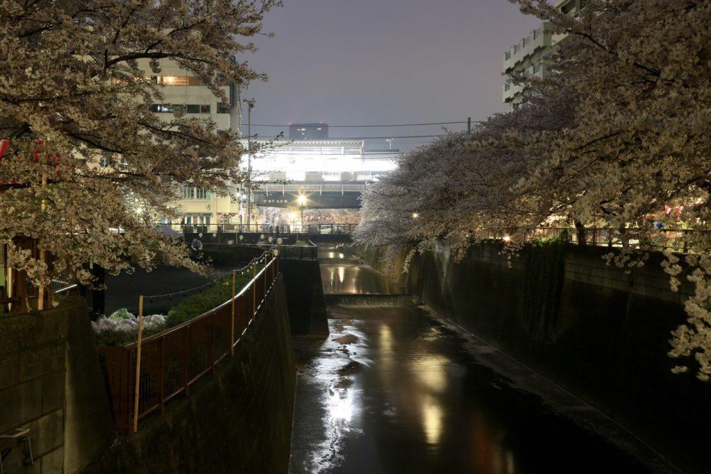 目黒川桜ライトアップ2020